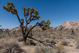 Scenic Joshua Tree National Park vista, Southern California