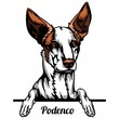 Podenco - dog breed. Color image of a dogs head isolated on a white background