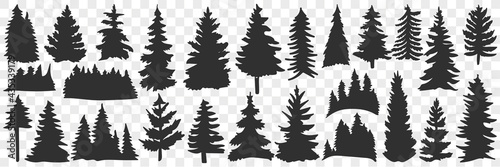 Fotografiet Silhouettes of spruce and pine doodle set