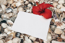 Closeup Of White And Gray Pebble Stones And Sea Shells On Beach. Blank Greeting Card, Invitation Mockup With Hibiscus Flower. Ocean, Seashore Natural Textured Background. Summer Vacation Concept.
