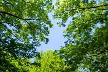 新緑の木々と間から覗く青空