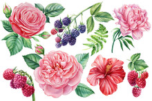 Watercolor Floral Elements. Raspberry, Blackberry, Rose, Hibiscus And Peony Flowers, Botanical Illustration