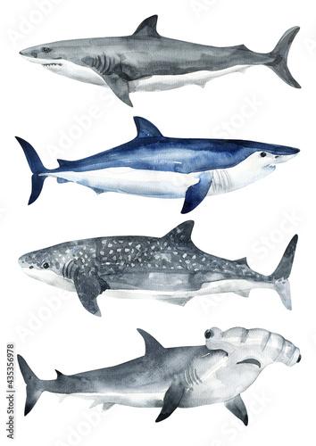 Cuadros en Lienzo Set of cetaceans painted in watercolor