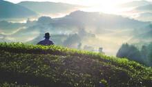 Farmer At Tea Plantation In Malaysia