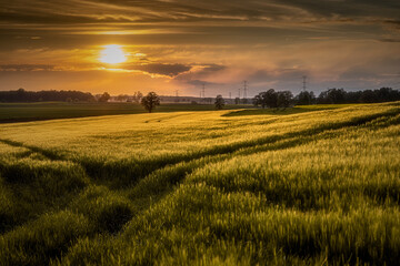 idylliczny zachód słońca nad polami zbóż późną wiosną