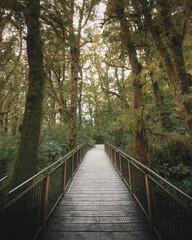 Walkway in a tropical jungle
