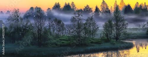 Foto fog rainforest dawn, nature landscape trees