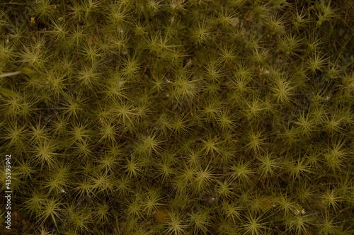 Foto Textura natualeza amarilla