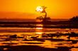 Leinwandbild Motiv Mangroves
