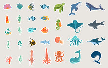 Cartoon Sea Animals. Cute Turtle, Whale, Dolphin, Octopus And Colorful Fishes. Childish Colored Flat Cartoon Vector Illustration Isolated On White Background