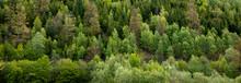Dark Green Forest Landscape