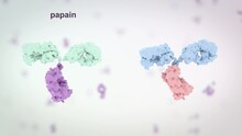 Medically Accurate Medical Illustration Of An Antibody