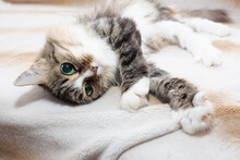 Cat's Morning. The Cat Woke Up And Stretched Out Its Paws With Pleasure. Cute Fluffy Pet. Big Green Eyes.