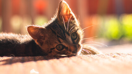Młody kot główka