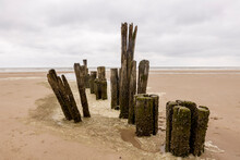 Old Decaying Rotten Wooden Wave Breaker Poles Surrounded By Foam On A Dutch Beach On An Overcast Grey Afternoon Day With The North Sea In The Background