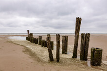 Old Decaying Row Of Palisade Pile Head Rotten Wooden Wave Breaker Groyne Poles Surrounded By Foam On A Dutch Beach On An Overcast Grey Afternoon Day With The North Sea In The Background