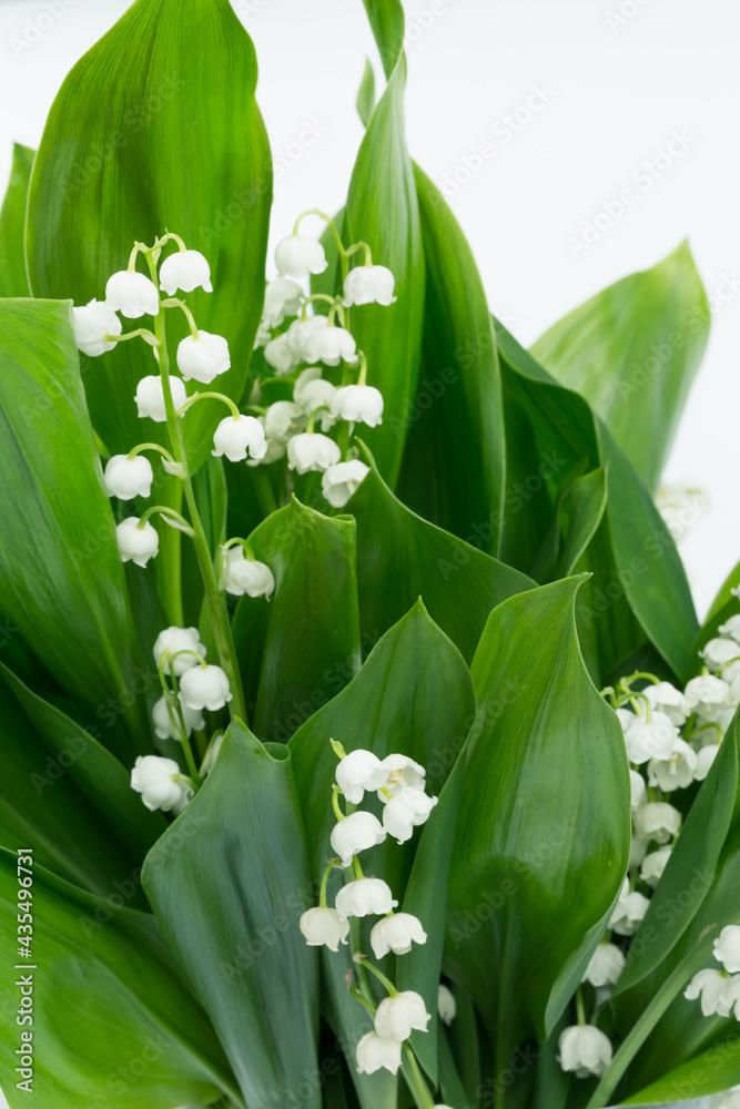 Konwalie majowe, kwitnące białe kwiaty, z zielonymi liśćmi, na białym tle