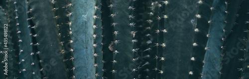 Canvastavla green cactus plant closeup texture background, succulent leaf design with nature