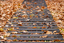 An Old Damaged Wooden Path With Dry Oak Leaves In A Park. Photo In Perspective With Selective Focus