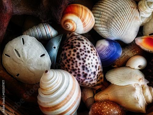 Fotografia basket of colorful seashells