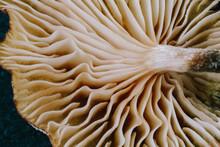 Closeup Of Mushrooms