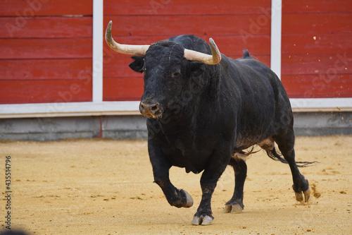toro en plaza de toros