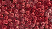 Pink, Romantic Flower Blooms Arranged In The Shape Of A Wall. Colorful, Vibrant, Roses Composed To Create A Beautiful Floral Background. 3D Render