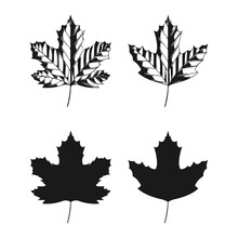 Vector Illustration Of Sycamore Leaves Isolated On White Background. Maple Leaf Clip Art.