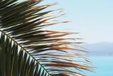 Fototapeta Fototapety z morzem do Twojej sypialni - Gałąź od palmy z cienkimi liśćmi na tle niebieskiego nieba