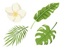 Monstera, Palm And Banana Jungle Leaves, Plumeria Blossom, Green Exotic Foliage, Nature Botanical Decorative Set. Botanical Elements For Logo, Cosmetics, Spa, Beauty Care Products