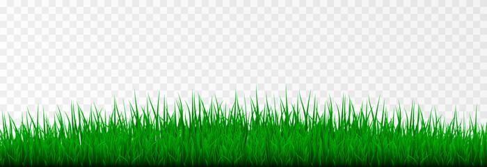 Vector grass. Grass, lawn, field. Young grass png.