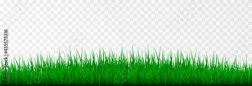 Fotografie, Obraz Vector grass. Grass, lawn, field. Young grass png.