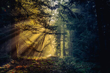 Forest Light In The Smog