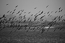Abstract Blurred Background, Flock Of Black Birds In Flight, Concept Of Sadness Stress, Autumn Depression