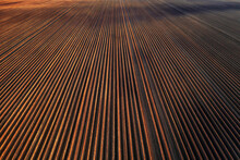 Plowed Field Prepared For Planting Crops In Spring