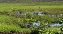 Marshland Of Florida Landscape With Tropical Birds In The Background.