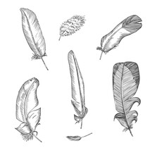 Set Realistic Sketch Of Bird Feather On Isolated Background. Detailed Ink Line Pen Clip Art, Black And White Boho Clipart. Hand Drawn Engraving Style Plume. Vintage Vector