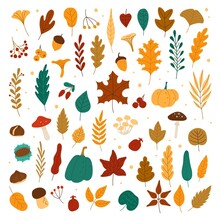 Autumn Elements. Leaves, Acorns, Chestnuts, Berries, Pumpkins, Mushrooms. Fall Forest Foliage And Autumnal Elements Hand Drawn Vector Set. Colorful Dried Fallen Plants, Organic Herbarium