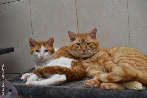 Obraz na plátně hermanos gatos