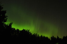 Green Aurora Borealis Over Silhouetted Trees.