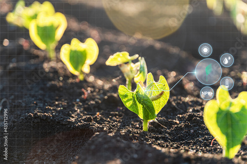 Foto Agriculture and artificial intelligence technology in smart farm