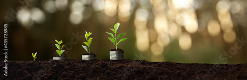 money and plants growing - success and investment concept