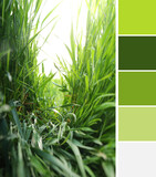 Green grass on spring day. Different color patterns