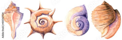 Fotografering Watercolor illustration with bright seashells