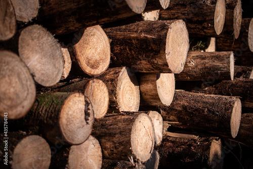 Photo EInfach nur Holz