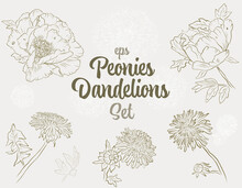 Outline Peonies And Dandelions Flowers Set- A Collection Of Vintage Vector Hand-drawn Style Flowers. Maybe Use For Wallpaper, Textile Or Card, Wedding Design.