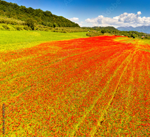 aerial view on the field of poppies #435801136