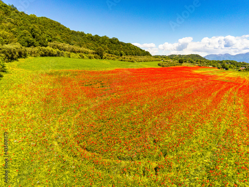 aerial view on the field of poppies #435801371