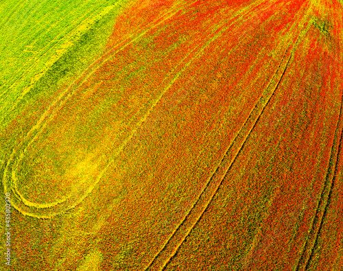 aerial view on the field of poppies #435802370
