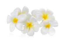 Frangipani Flower Isolated White